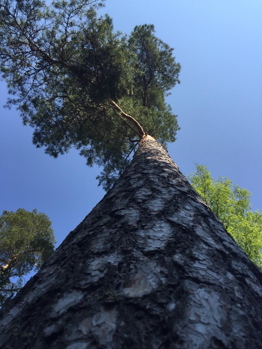 Oman elämäni Pocahontas, miten minusta tuli puunhalaaja